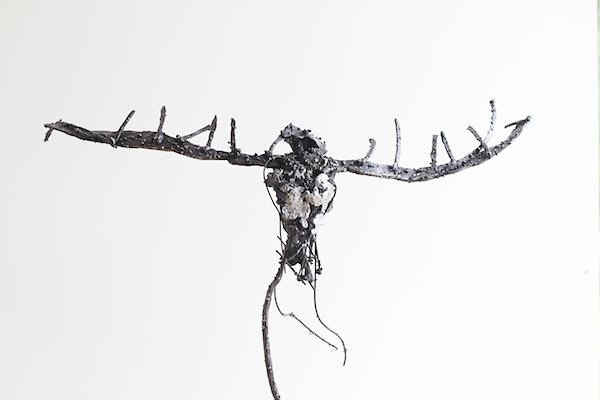 Kokkolintu (Kokko bird)